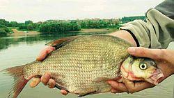 Ловля леща со дна по открытой воде. Часть 3