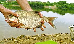 Ловля леща со дна по открытой воде. Часть 4