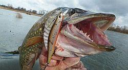 Муть рыбалке не помеха